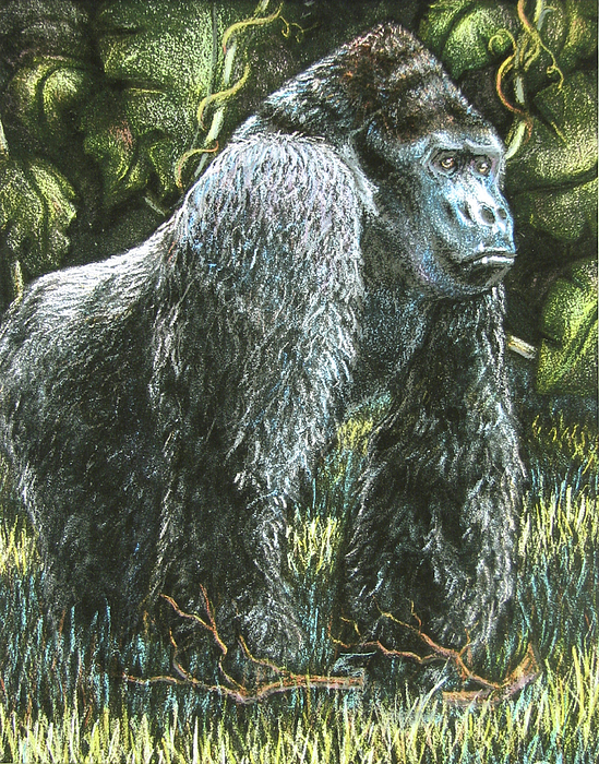 Silverback-King of the Mountain Mist by Beverly Fuqua